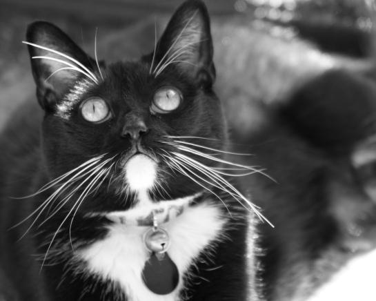 cat, death of cat