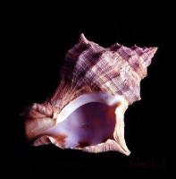 The Shell, The Shell the movie, Mike Lizarraga, screenwriting